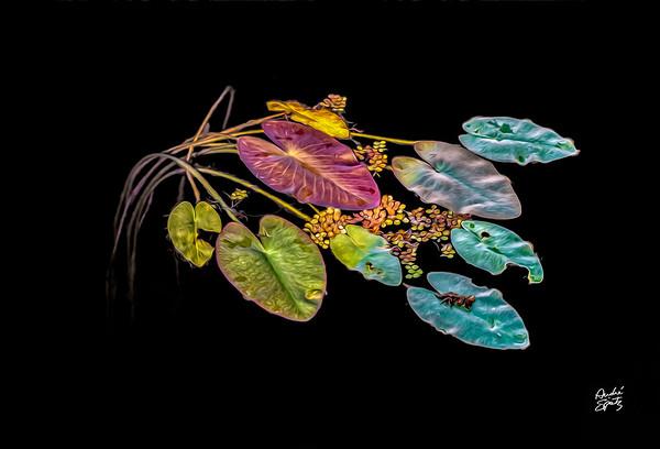 Andre Spatz Photography