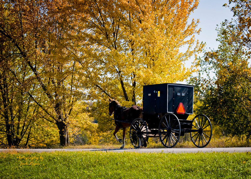 Amish Buggy Ride .jpg