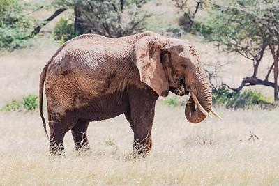 Elephants - Kenya 2019