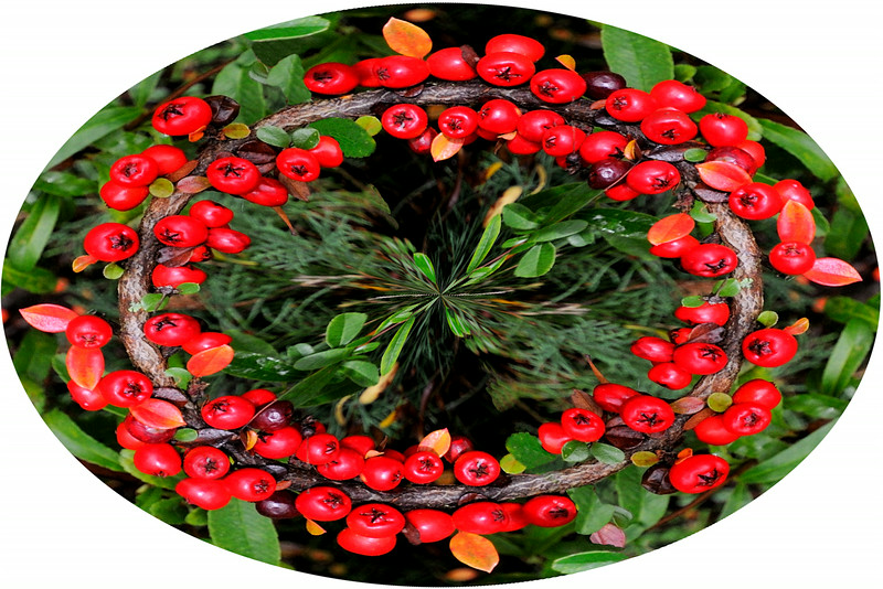 Colwick Berries~5663-1pco.