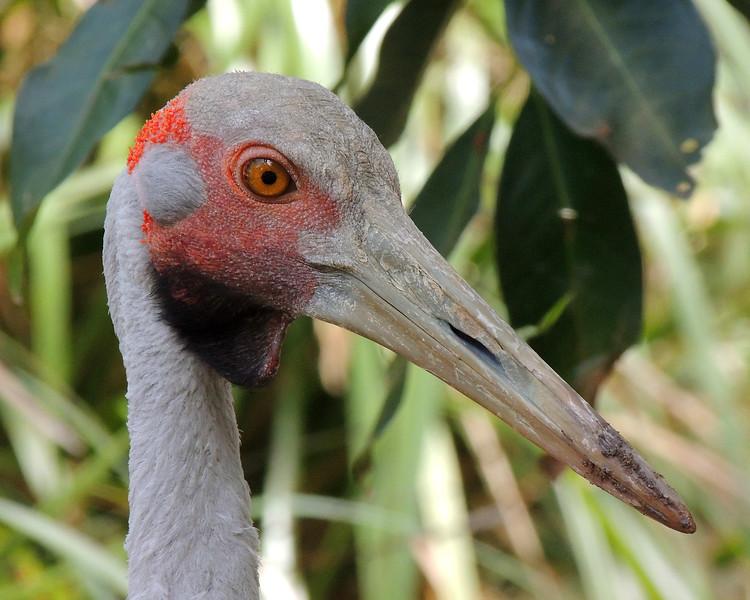 Cairns Tropical Zoo 092 N.jpg