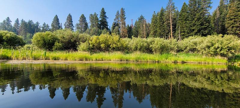 several plant communities along the creek