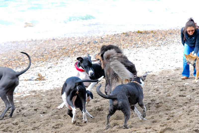 dogs_beach-026.jpg
