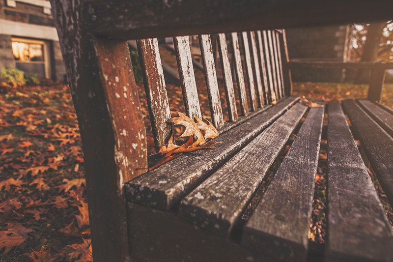 autumn-bench-fall-4119.jpg