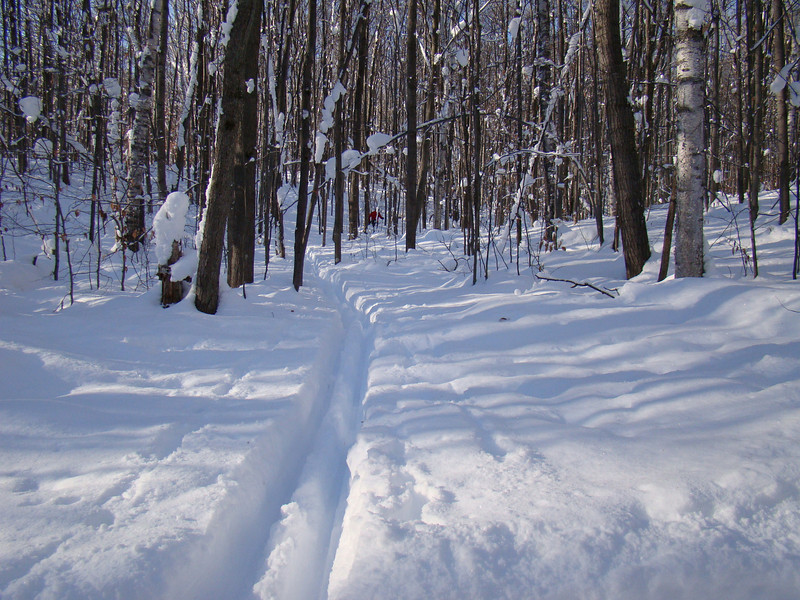 From groomed trail to back country trail - on racing skis! This trail leads back to Bill's house at Michaywe. You can barely see his red jacket in the picture.