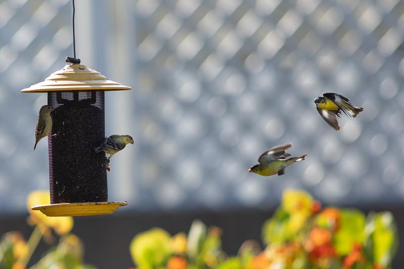 birds-9899.jpg