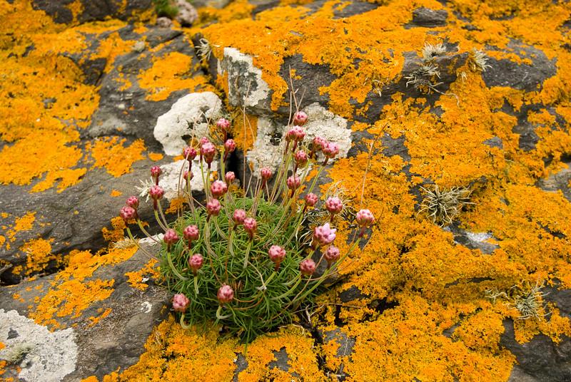 lichen flowers.jpg