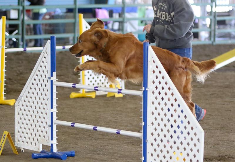 3-15-2015 Bloodhound-0605.jpg