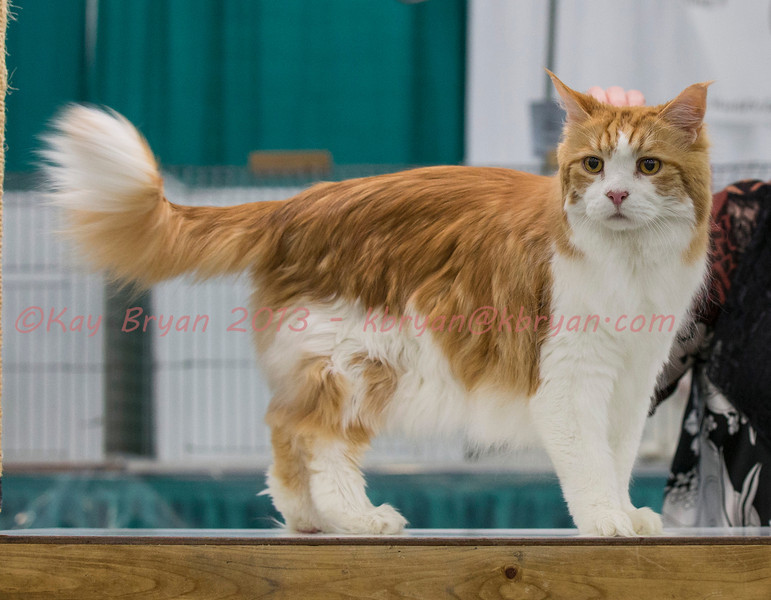 CatShow2014037_1.jpg