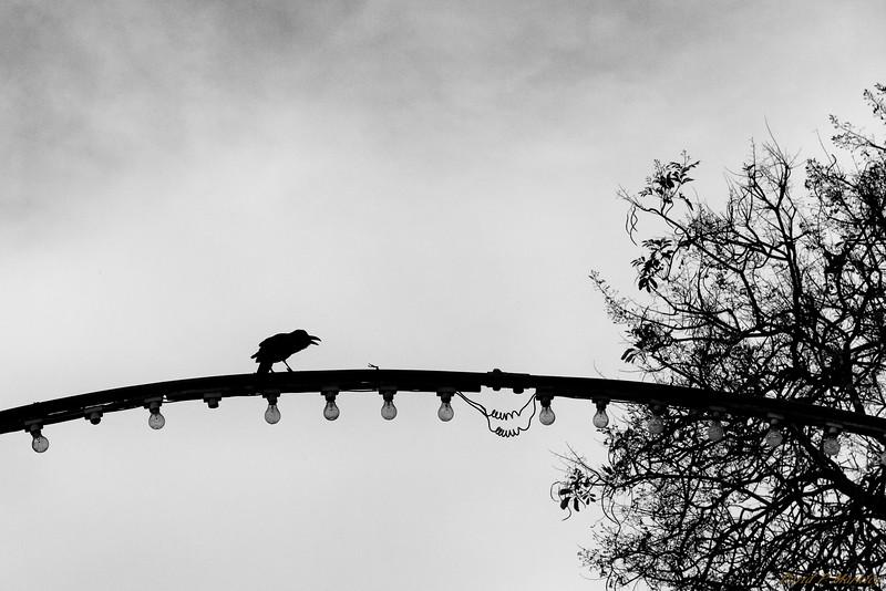 Bird Crossing