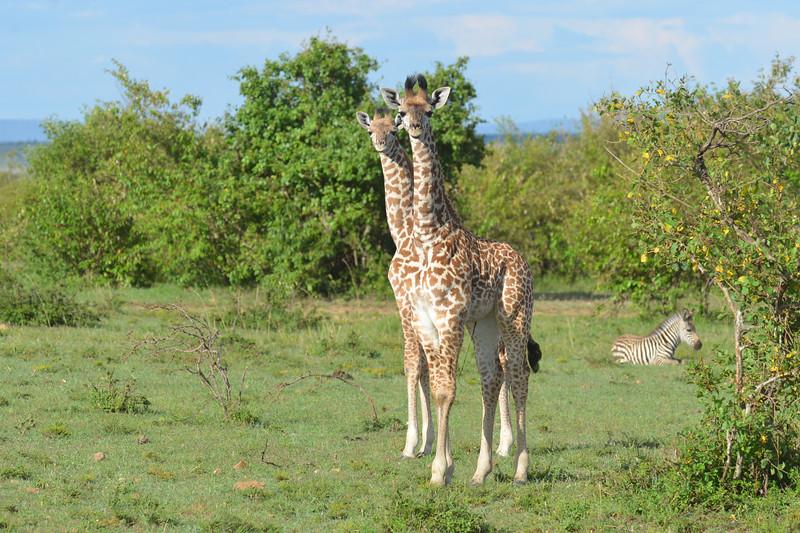 East Africa Safari 160.jpg
