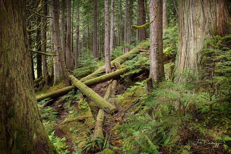 Older Forest 06.07.2020