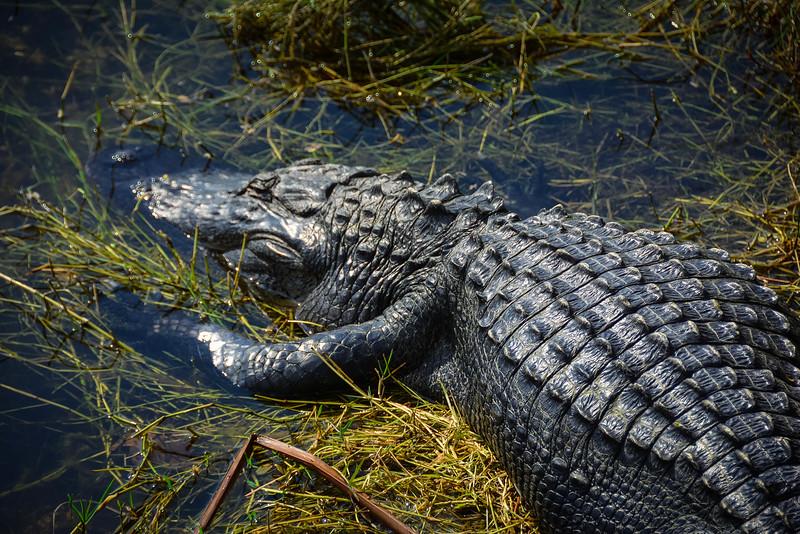 Everglades-21.jpg