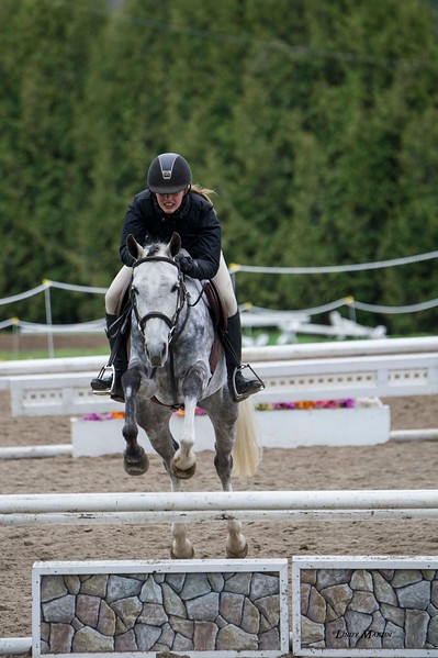 Equine photography at Limestone Schooling