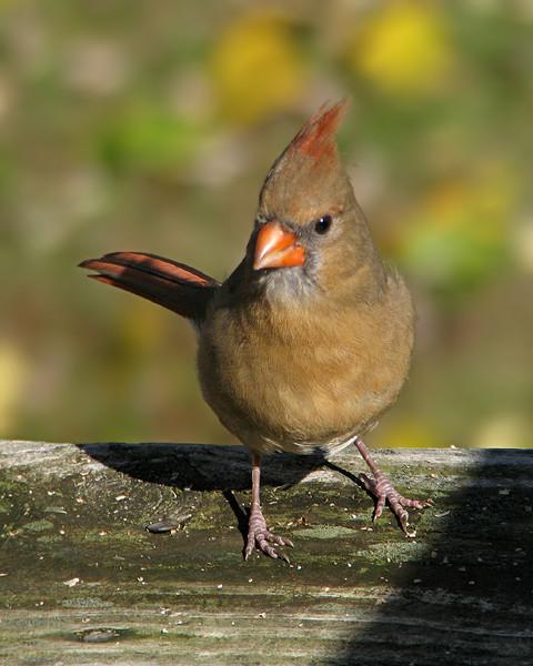 cardinal_0427_1.jpg