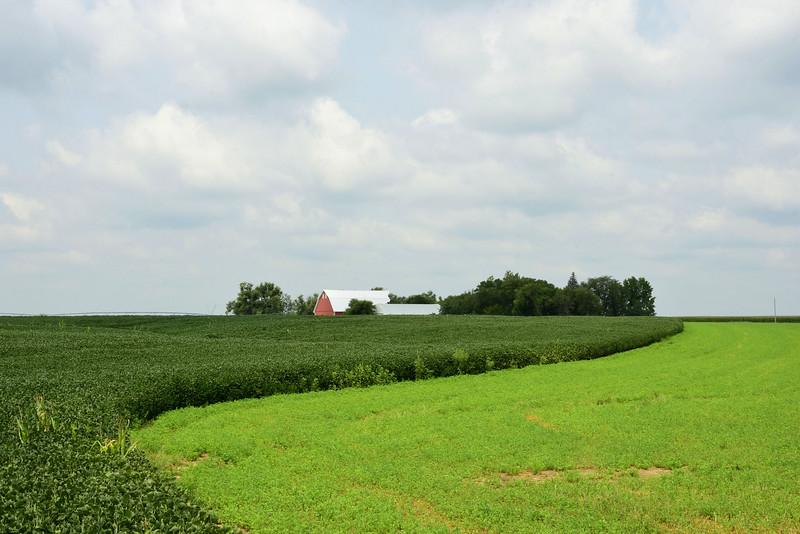 A Field of Soy Beans, Flows Under a Cloud Dappled Sky