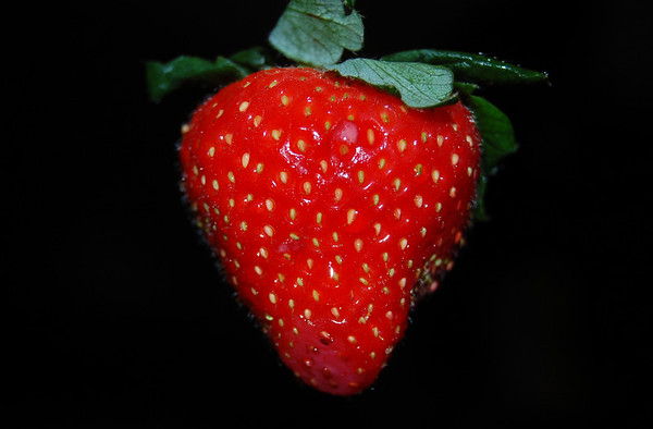 Strawberry Bit by Bit
