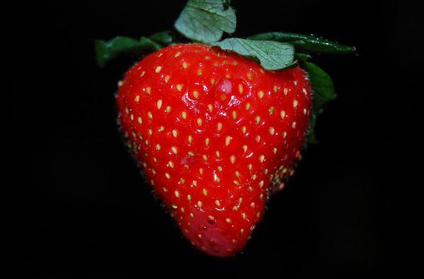Strawberry Bit by Bit