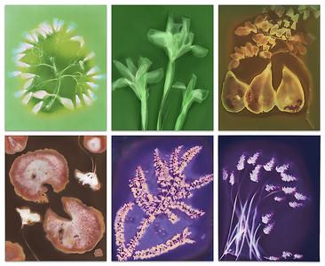 Rosie Hughes - Cycle of Life in Lumen Prints