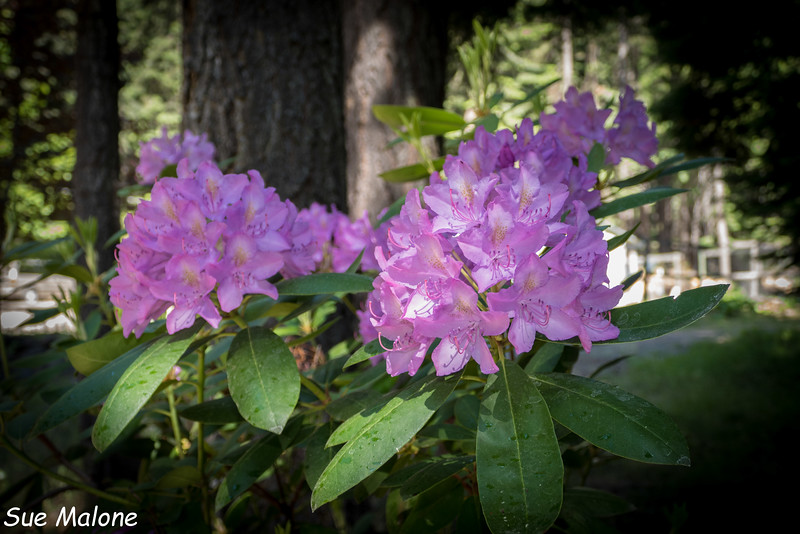 blooming at Rocky Point-25.jpg
