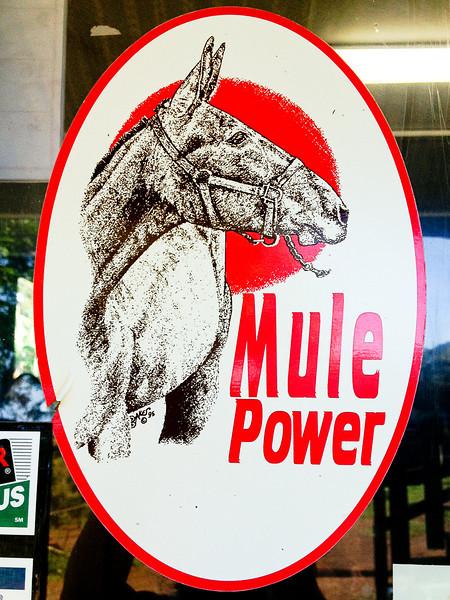 mule power.jpg