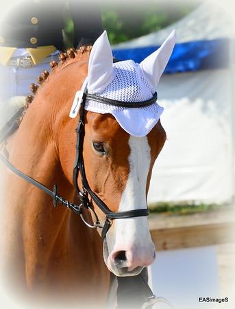 Ocala Horse Show