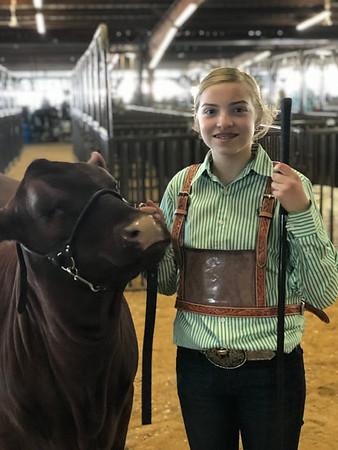 Hunt County Fair 2019: Breeding Heifers