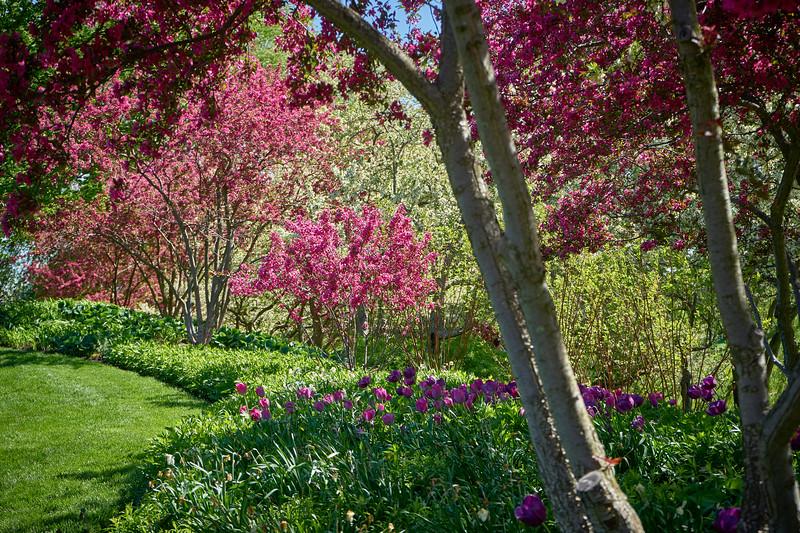 Botanic Garden 5-23-19 3.jpg