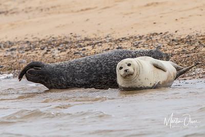 Seal, Common