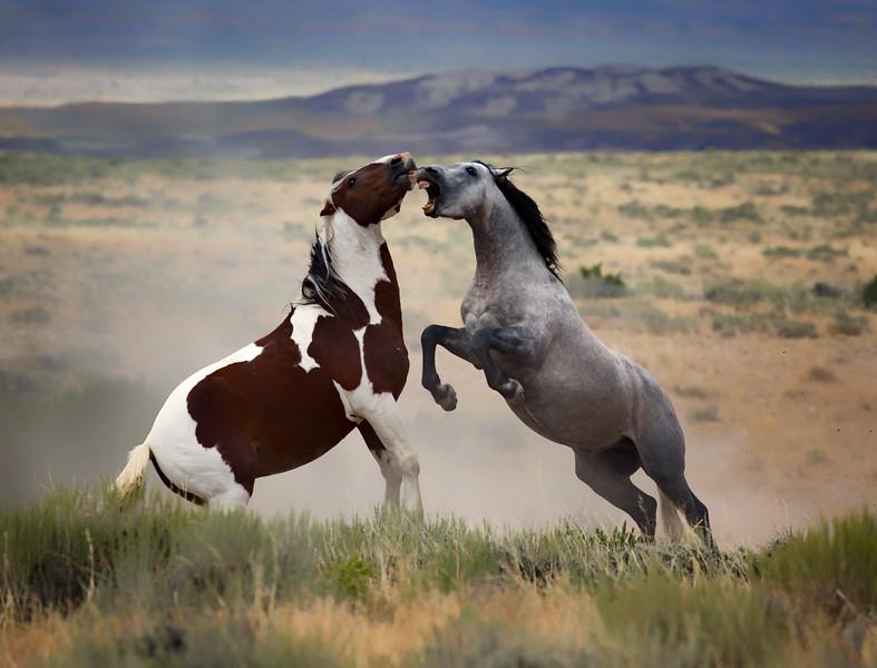 War Horses VIII
