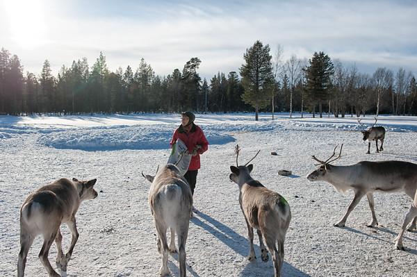 Hungry Hungry Reindeer
