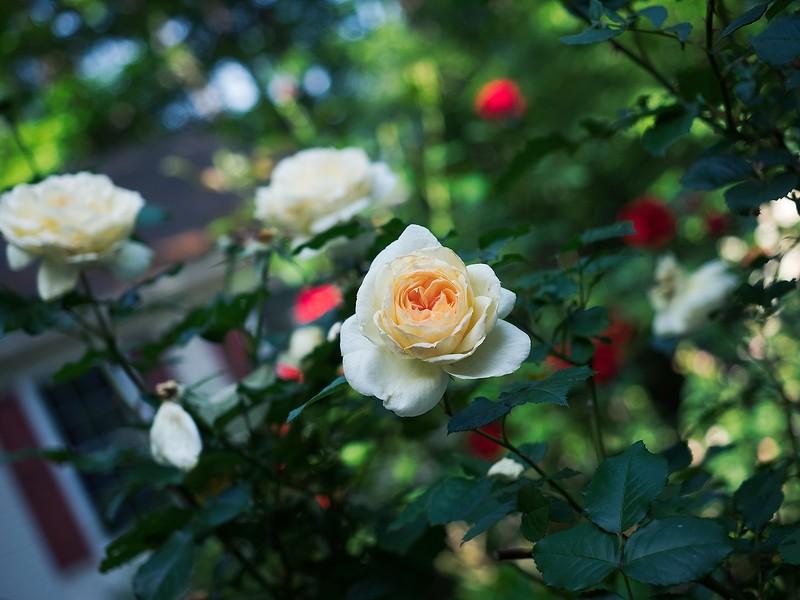 garden_may04-5040038 copy.jpg