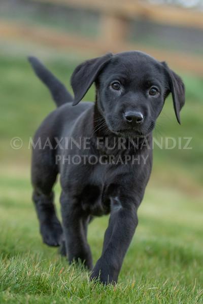 Weika Puppies 24 March 2019-6590.jpg