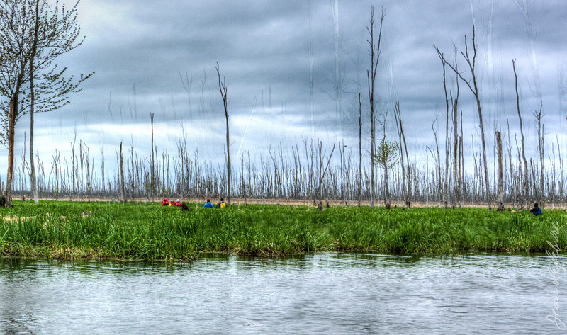 Minesing_Swamp_May2013 (68 of 263)_HDR