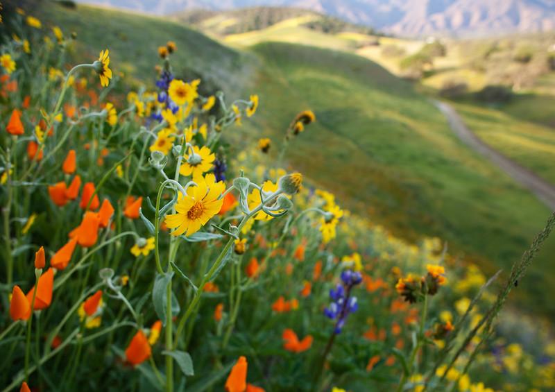 flowerhill.jpg