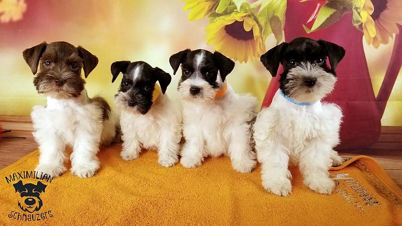 Julie Puppies 004.jpg