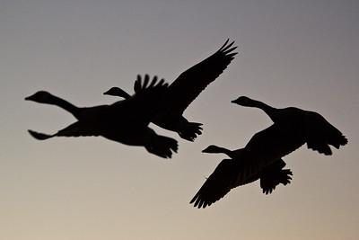 Latest Bird Photos