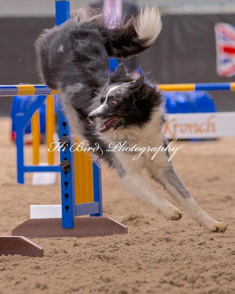 Large dog jumping  1103.jpg