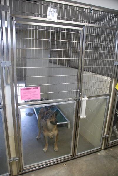 Kentucky Humane Society 2010 016.jpg