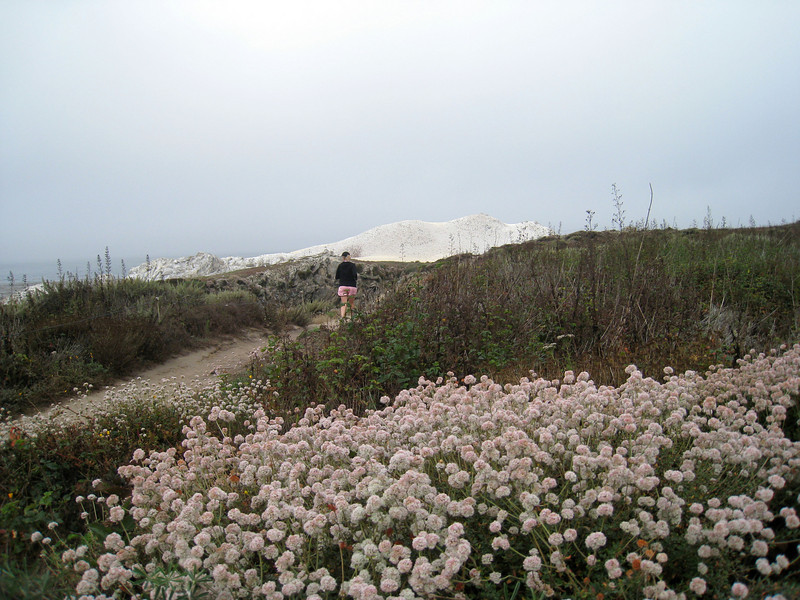 Point Lobos 8:2009 7.jpg