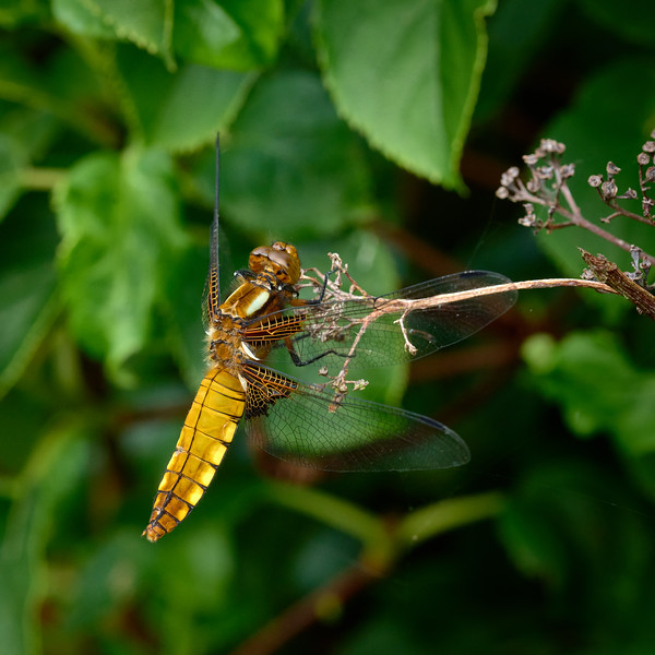 Garden Dragon-0196 - 9-37 am 1.jpg