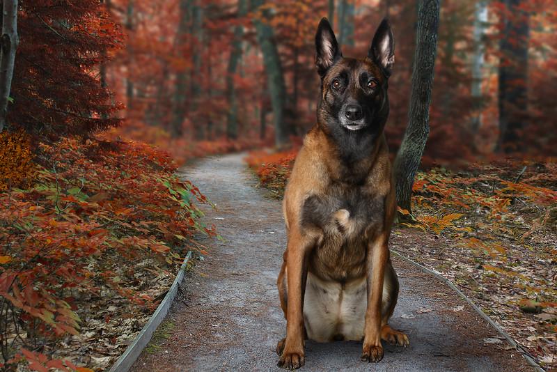 Browndog-4.jpg