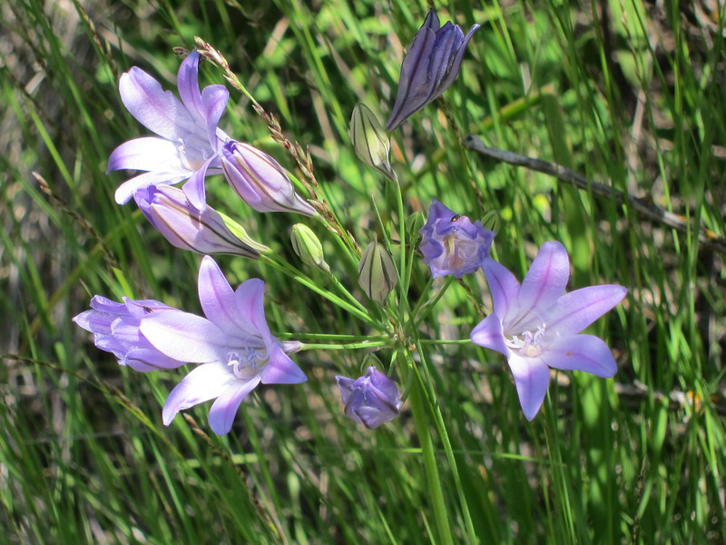 img_0679purpleflowers.jpg