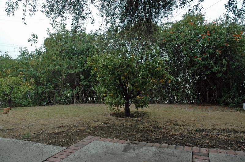 madera_front yard.jpg