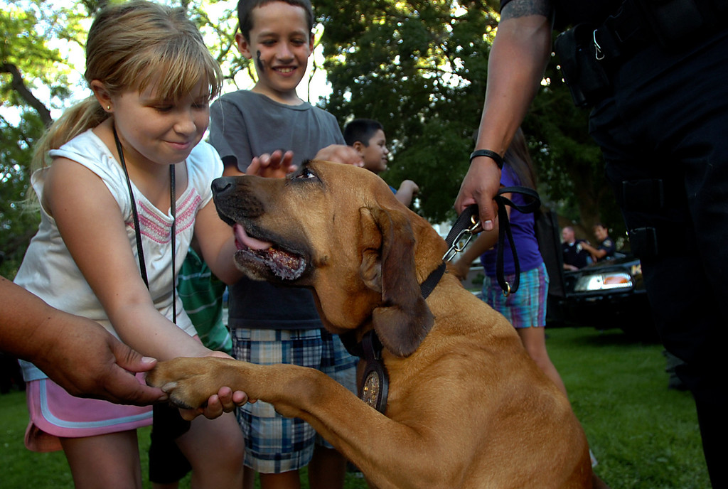 . In this 2010 file photo, Sabrina Sidow, 9, of Pomona, left, pets Pomona Police Dog Willow during National Night Out at the Pomona Civic Center Plaza in Pomona. Pomona Police Department�s senior bloodhound, Willow, died early Thursday morning while being treated for a sudden condition of gastric torsion, or bloat, according to police officials. (Staff File Photo)