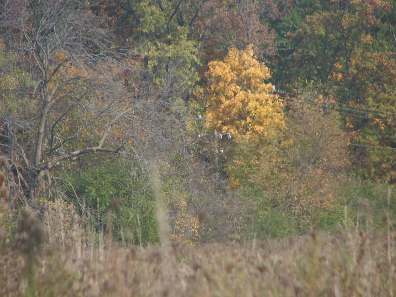 Fall pics 2008 015.jpg