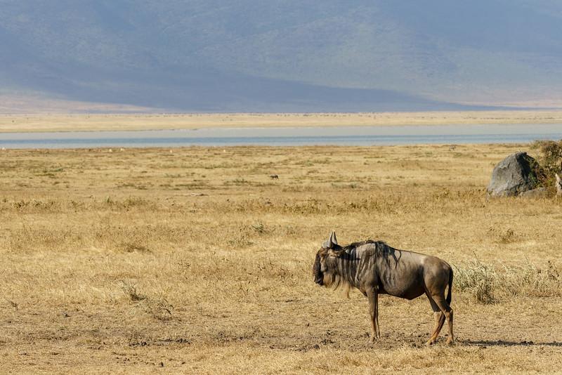 NgorongoroCrater-20181003-0170.jpg