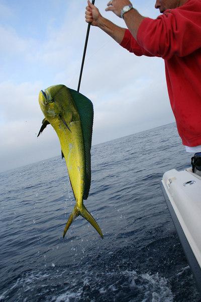 fish  2352.jpg