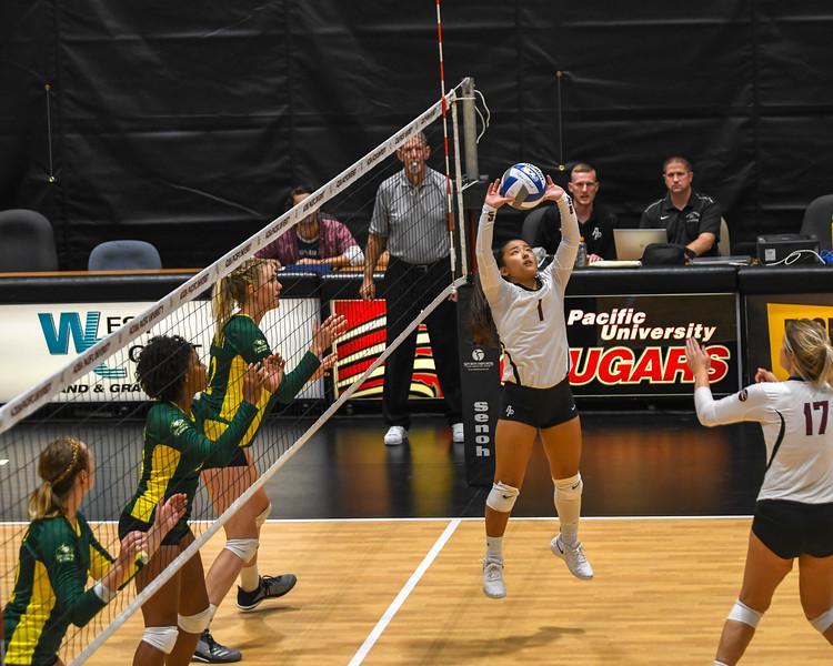 20180905 Volleyball-4427.jpg