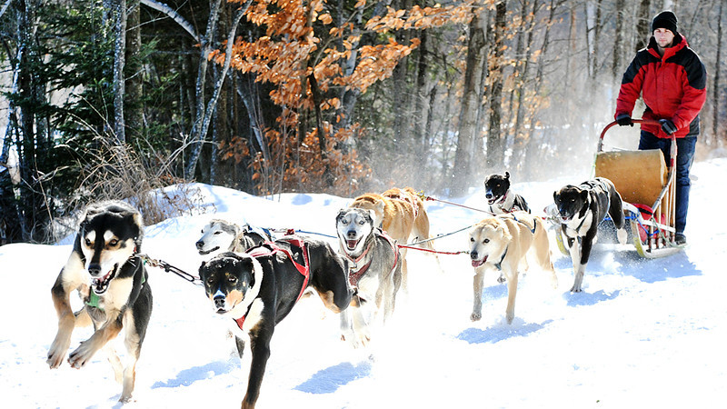 Ultimate Dog Sledding Experience.m4v
